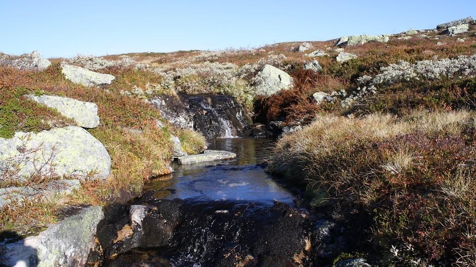 Pilgrimsvandring i vacker natur i Lofsdalen