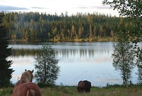 Pilgrimsvandring – från Lövväsvallen till Lillhärjåbygget