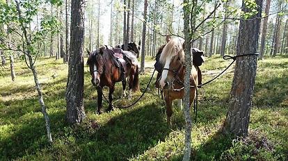 Pilgrimsvandringen – Hästar