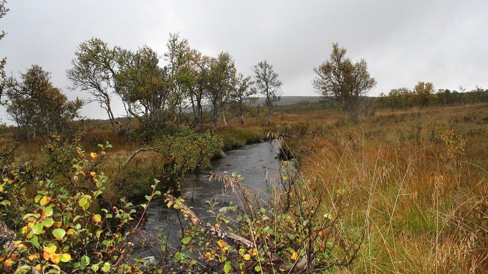 Vacker natur på Pilgrimsvandringen i Lofsdalen
